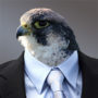 The Falcon